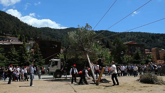 FOTO 1 Fiesta del pino