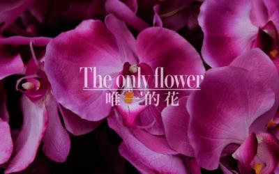 «The Only Flower» de César Pérez Herranz